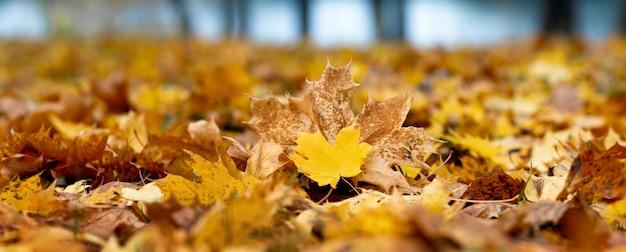 Желтые кленовые листья на земле в лесу у реки, осенний фон