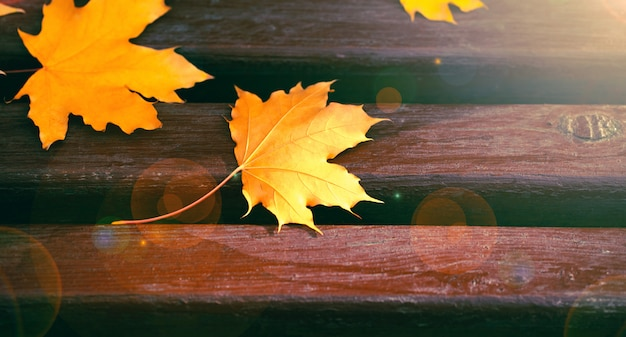 Yellow maple leaves on wooden bench. autumn fall