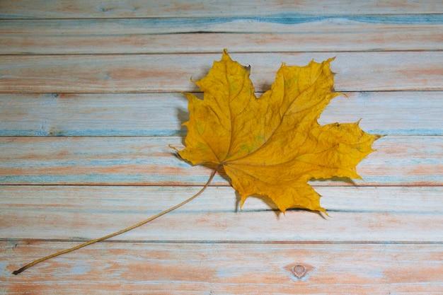 Желтый клен на деревянном столе, осень