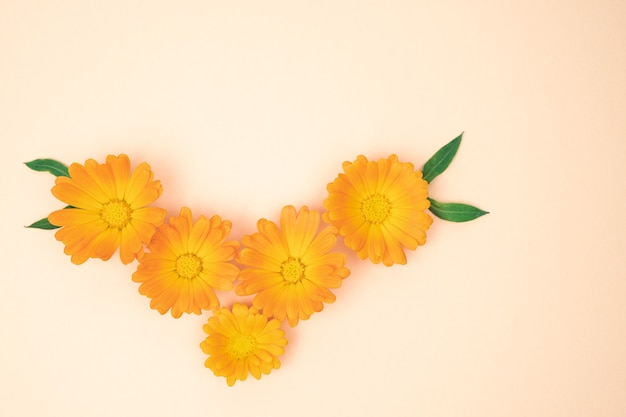 Yellow marigold flowers with leaves on pink background. copy space.