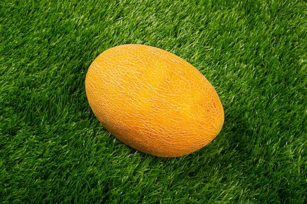 Yellow melon on green grass