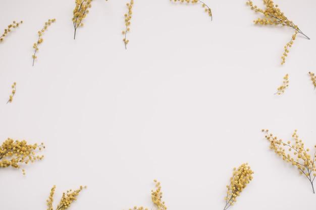 흰색에 노란색 미모사 꽃