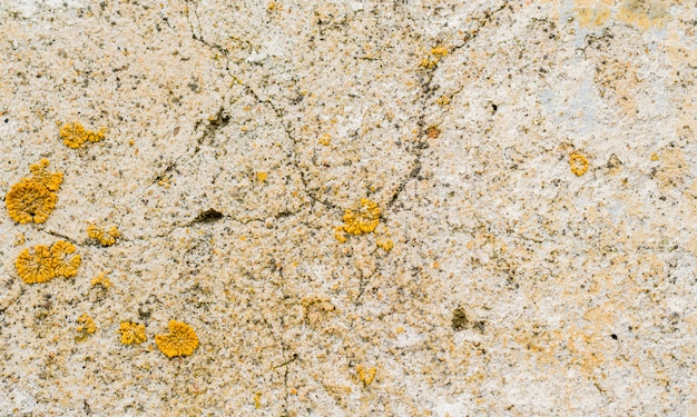 Yellow mold on a stone wall