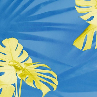青い背景に黄色のモンステラとヤシの影の葉