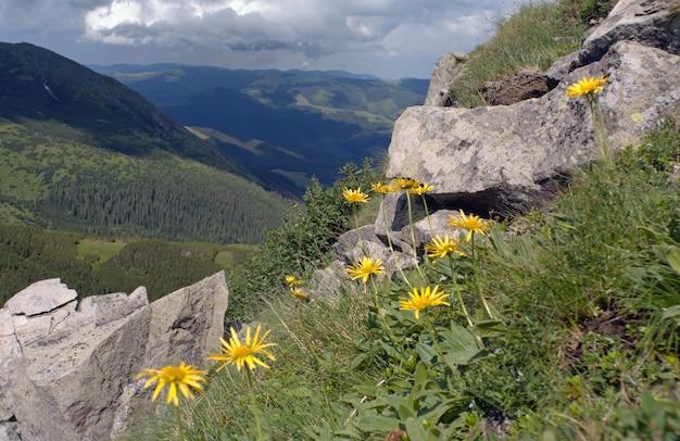 바위 산에 계곡 위에 노란 산 꽃