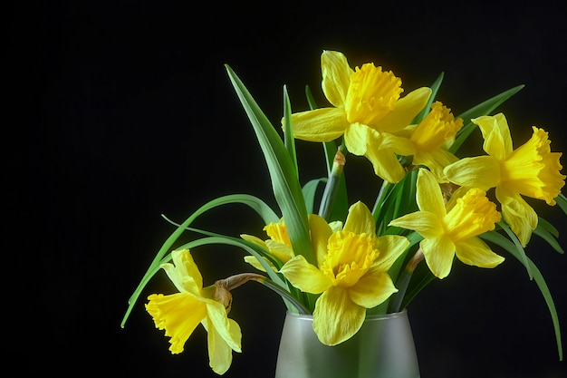 Yellow narcissus flower in a glass vase with water