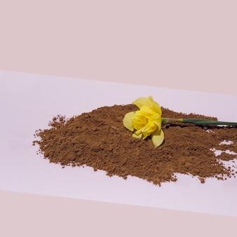 柔らかいパステル調の背景に茶色のココアパウダーの黄色い水仙の花。コンセプチュアルアート。