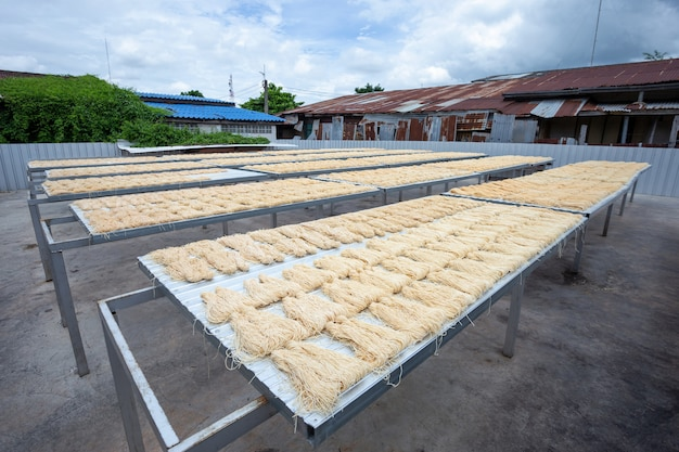 Yellow noodles or mee sua food drying in the sunlight making sun dried in thailand