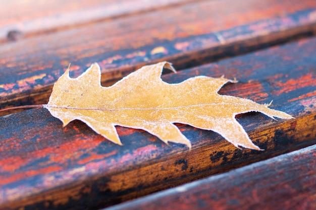 도시 공원에서 벤치에 서리가 덮여 노란색 오크 잎