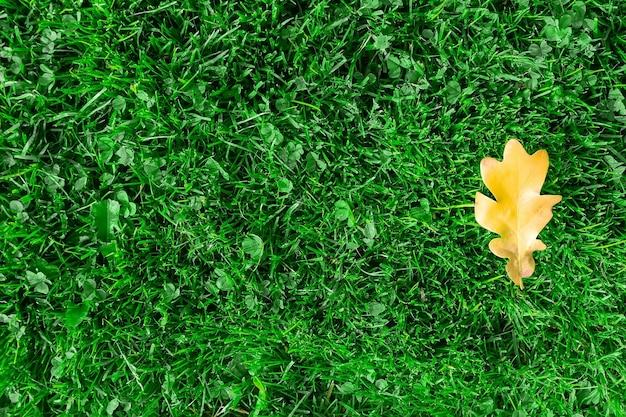 緑の草の上の黄色いカシの葉。黄色いカシの葉は一年の秋の時期に緑の草の上にあります。緑の草とオークの葉の背景。
