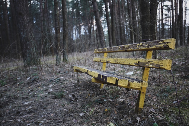 Yellow old bench in forest