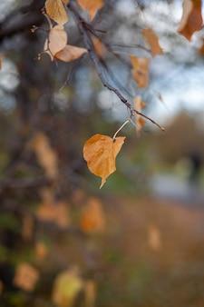 Желтые или сухие листья на ветвях деревьев осенью. листья березы, липы и других деревьев на ветвях. есть пустое место для текста