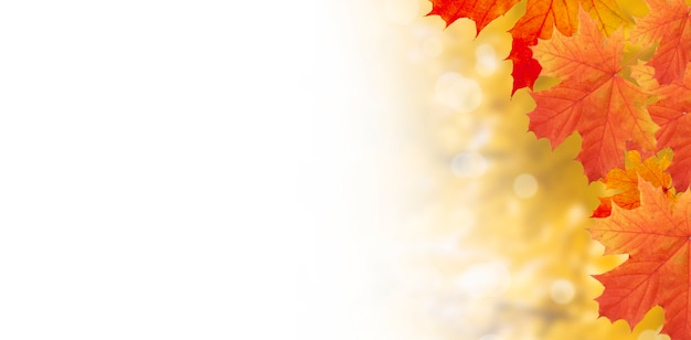 Yellow-orange maple leaves on a background of autumn nature with bokeh and copy space. banner format