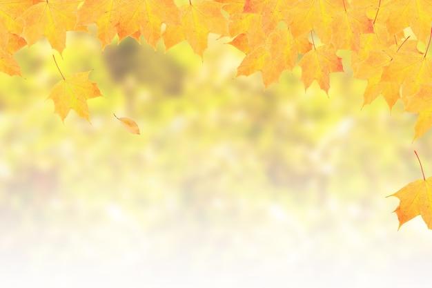 秋の自然を背景に、ボケ味とコピースペースのある黄橙色のカエデの葉。バナーフォーマット