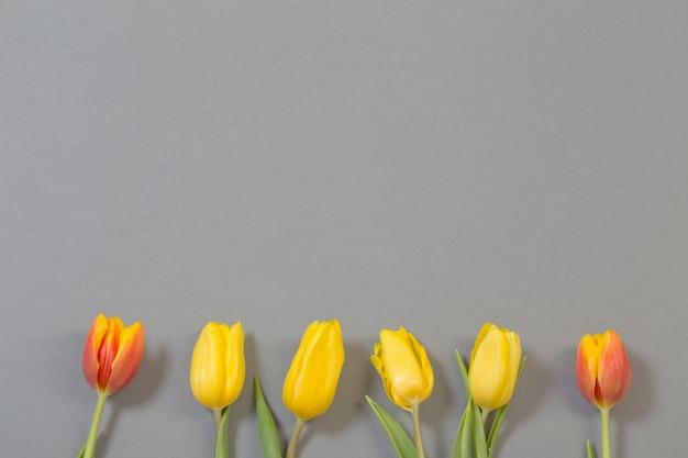 Yellow and orange tulips on gray background