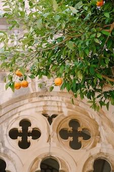 庭のアーチと柱の網目模様に対する木の上の黄色いオレンジ