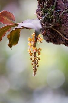 Желтая орхидея, цветущая в естественной среде обитания