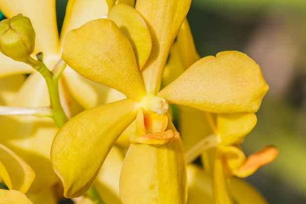 Yellow orchid on blurred background.