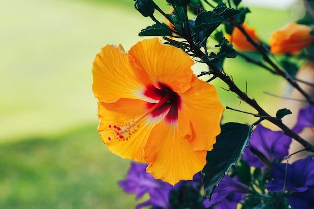 자연, 신선한, 자연, 놀라운 난초에 노란 난초 꽃