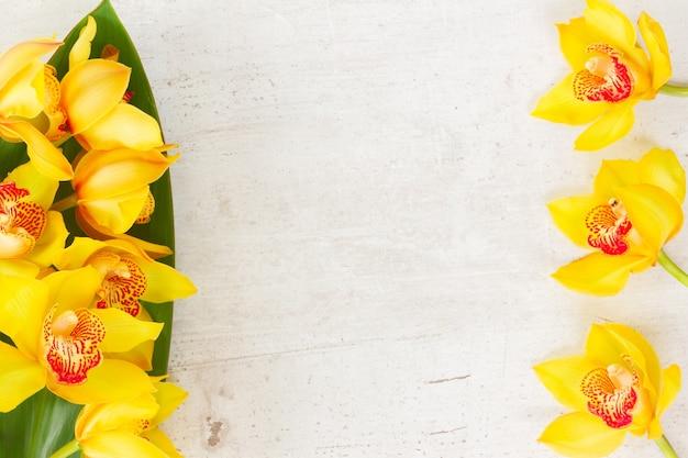 白い老化した背景に黄色の蘭の花と緑の葉のフレーム
