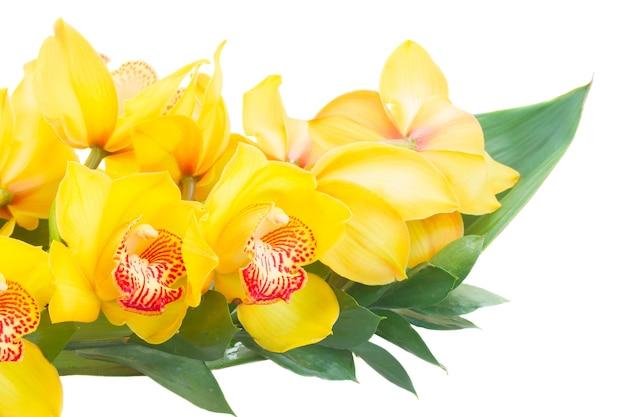 Желтые цветы орхидеи и зеленые листья крупным планом на белом фоне
