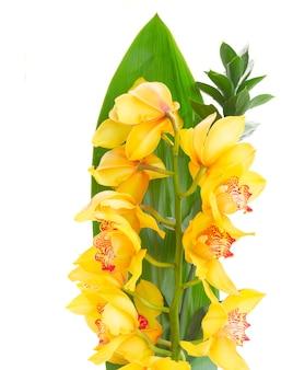 黄色の蘭の花と緑の葉が白い背景で隔離