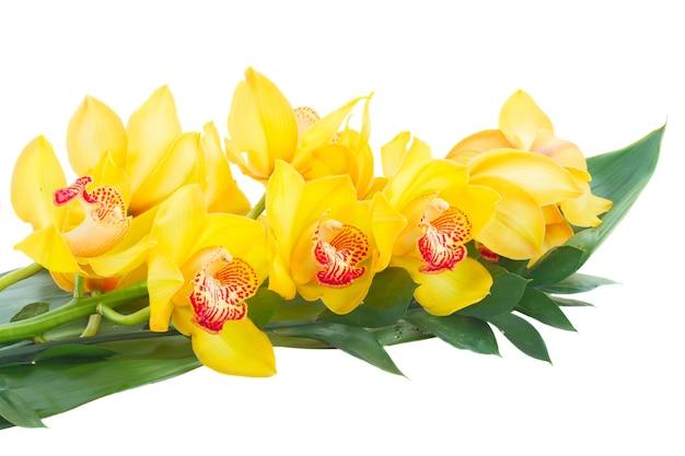 Желтые цветы орхидеи и зеленые тропические листья, изолированные на белом фоне