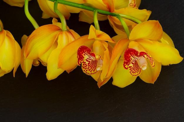 黄色い蘭の花は黒い石の背景に茎