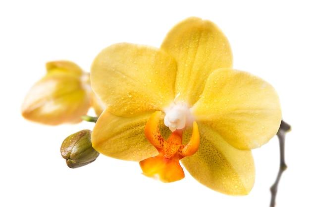 흰색 바탕에 노란색 난초