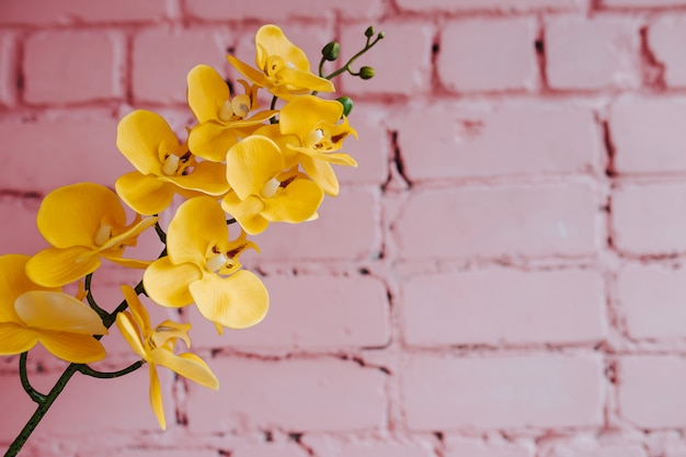 Yellow orchid on pink