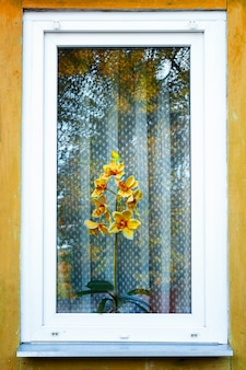A yellow orchid in the window of an old wooden house