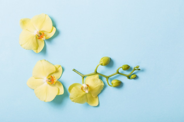 Yellow orchids on blue paper background