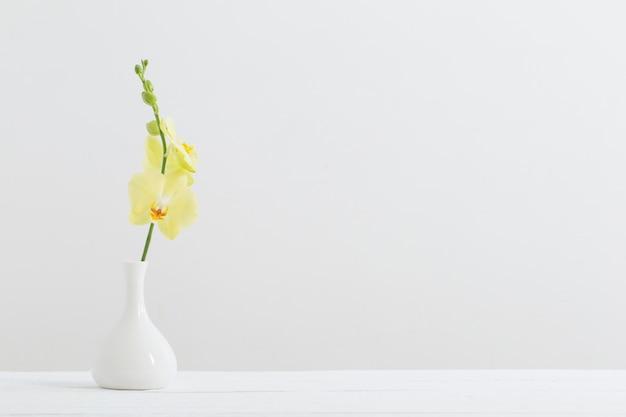 白い背景の上の花瓶に黄色の蘭