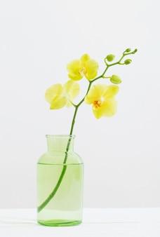 흰색 바탕에 꽃병에 노란 난초