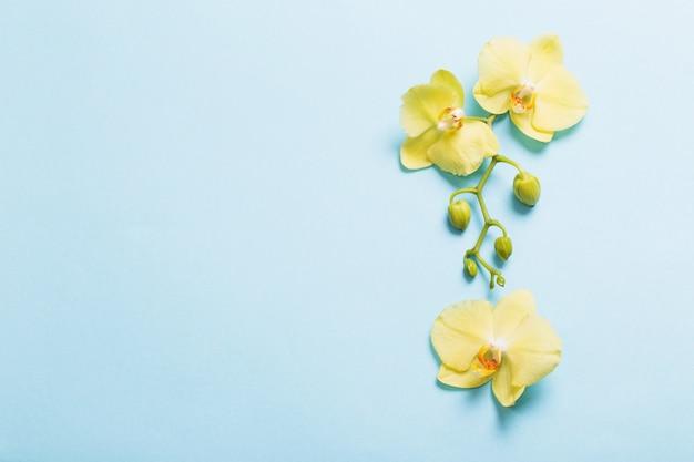 青い紙の背景に黄色の蘭