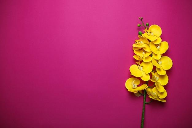 コピースペースとピンクの背景に黄色の蘭。ピンクの背景の聖バレンタインの日カード。