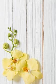 白い木に黄色の蘭