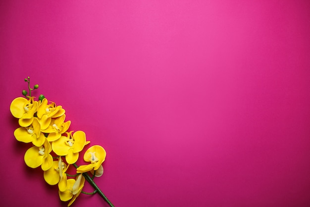 Yellow orchids on pink background with copy space. saint valentine's day card on pink background.