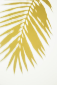 Yellow palm leaves on white backdrop
