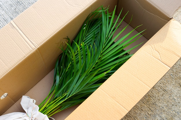 Желтая ладонь или пальма-бабочка в коричневой картонной коробке