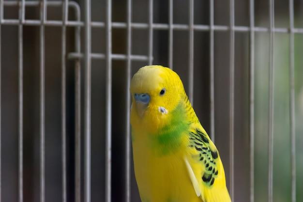 檻の中の黄色いオウム