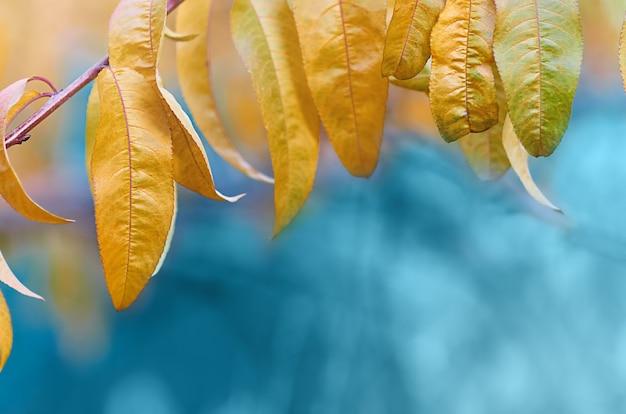 가을에 나뭇가지에 노란 복숭아 잎