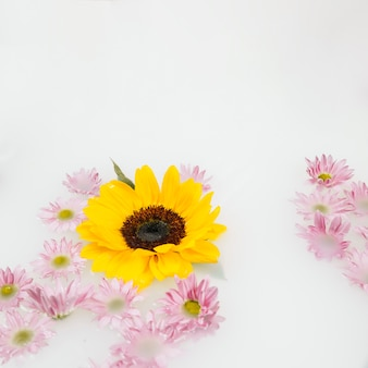 Yellow and pink flowers on liquid background