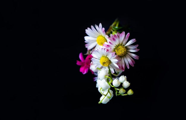 Yellow pink gift spring flowers copy space black background