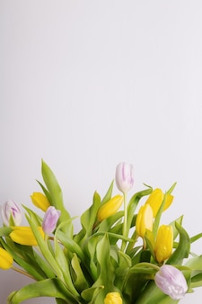 Yellow and pink tulips on on gray background. copy space