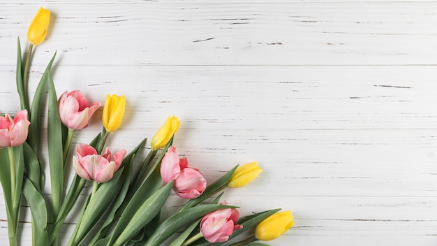 Yellow and pink tulips on white wooden textured backdrop