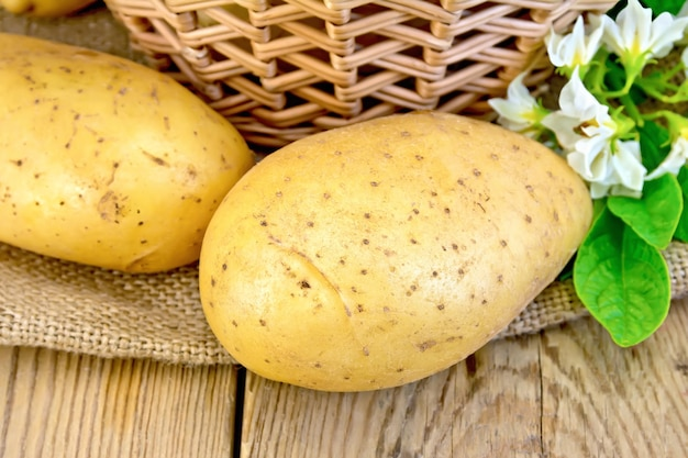 Yellow potato tubers with a flower on burlap, wicker basket on the background of wooden boards