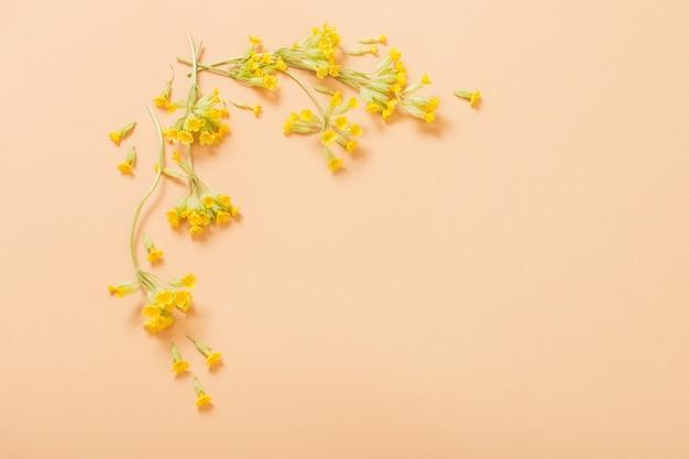 Желтая примула на оранжевом бумажном фоне на бумажном фоне