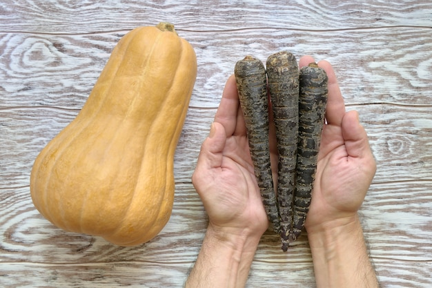 Yellow pumpkin on a wooden table and black carrots in a mans hands, top view