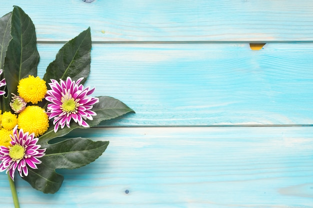 Yellow and purple chrysanthemum flowers on green leaves over the blue wooden background